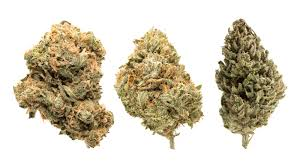 Expert Tips On The Effects Of Cannabis Disclosed Here